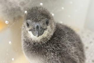 Sumida Penguin Week