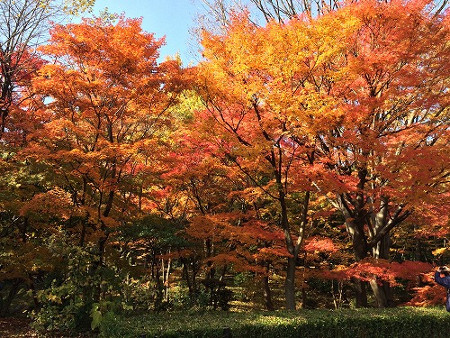 ≪Famous Autumn Foliage Spots≫ Kitanomaru Park