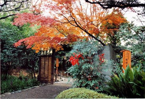 ≪Famous Autumn Foliage Spots≫ Mukojima-Hyakkaen Gardens