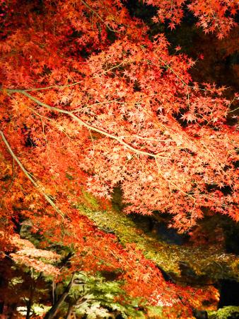 Otaguro park Autumn Foliage Light-up