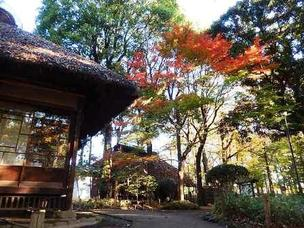 ≪Autumn Foliage Spots≫ Roka Koshun-en Park
