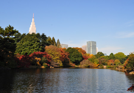 ≪Autumn Foliage Spots≫ Shinjuku Gyoen National Garden