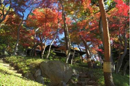 ≪Autumn Foliage Spots≫ Tonogayato Gardens