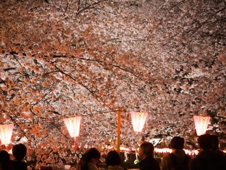 ≪Cherry Blossom Spots≫ Meguro River