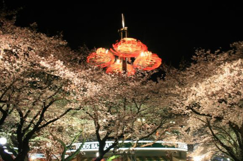 Image result for toshimaen sakura
