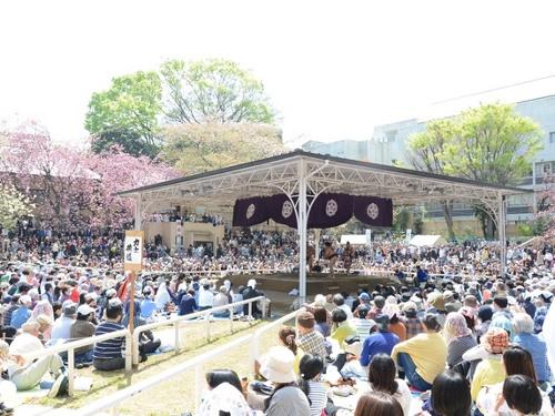 Spring Festival sumo wrestling tournament (Yasukuni Jinja Shrine)